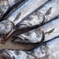 #BizTrends2019: In praise of the pilchard; the delights of unfashionable fish