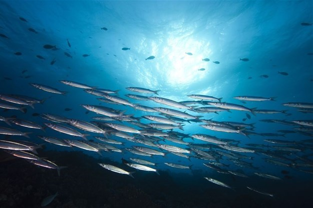 We can eat our fish and fight climate change too