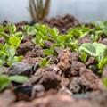 Nedbank, YES partner on urban aquaponic farming initiatives
