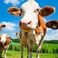 NPA provisionally withdraws Estina dairy farm case
