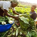 Africa farmers need finance that is focused on the entire value chain