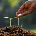 Final call to apply for AECF's agribusiness funding programme