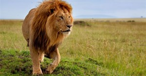 National Assembly adopts report on captive lion breeding
