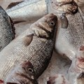 WorldFish, COMESA facility in Zambia to help boost fish trade in Africa