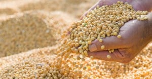 Improving the soybean value chain