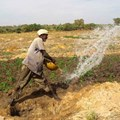Farmer irrigating vegetables in Mali ©Tingju Zhu/IFPRI