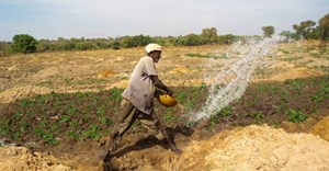 Farmer irrigating vegetables in Mali ©Tingju Zhu/IFPRI