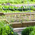 In 100 years' time, maybe our food won't be grown in soil