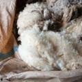 Wool market trades higher