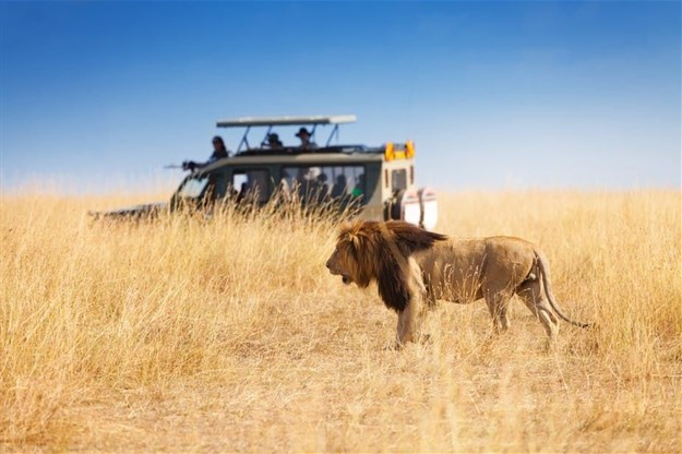 Kenya's tourism industry is heavily focused on its beaches and wildlife. Shutterstock
