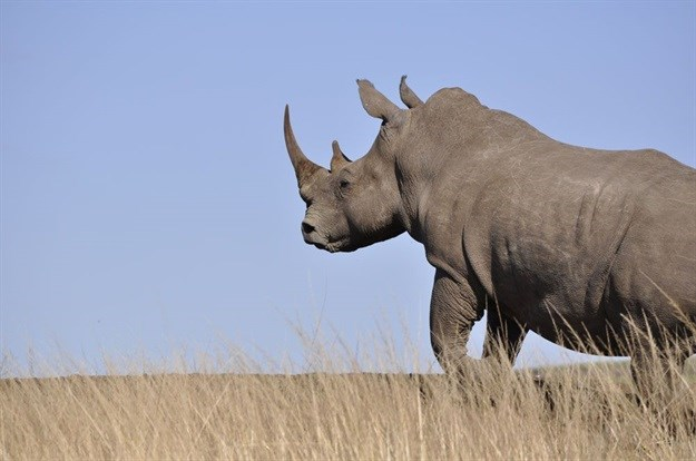 Two poaching attempts foiled in KZN