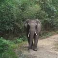 Female elephant spotted roaming Knysna forest