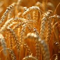 Global food prices show increase in January