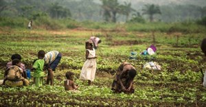 FAO seeks $940m to meet needs of food-insecure populations in more than 30 countries