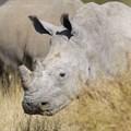 Mokonyane reports progress made on curbing rhino poaching