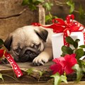 Survey says 12% of influencers buy their pets gifts on Valentine's Day