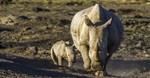 Four suspected poachers, staff arrested