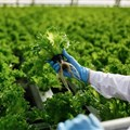 International push to improve food safety