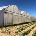Kuzisa injects R11m into fully black-owned M'Hudi wine farm