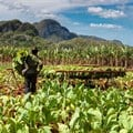 Stellenbosch University's agriculture initiative to aid Malawi farming community