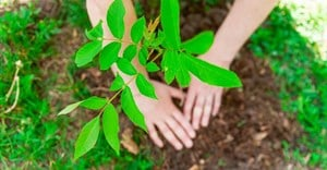 Cape Town secures R50m for green job creation, ecological restoration