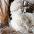 SA wool market resilient despite China's suspension