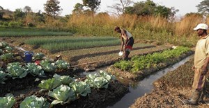 Irrigating Africa: Can small-scale farmers lead the way?
