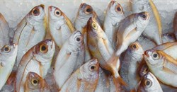 How MSC's ecolabelling is tackling seafood fraud