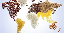 Global grains market developments, and the implications for SA