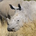 2019 Rhino Conservation Awards open for nominations