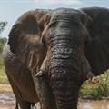 Judge intervenes to halt shooting of Riff Raff the elephant