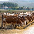 Support of SA cattle farmers is the key to a thriving beef economy