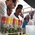 350 African researchers to benefit from training in how to tackle crop disease