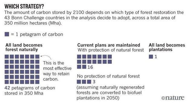 The choice between plantations and natural forests. (1 petagram = 1 billion tonnes).