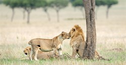 Ecotourism operators in Africa join forces to effect conservation change