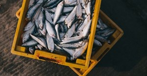 SA makes its mark in fisheries economy