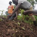 AFT Fund to launch 17 new projects in support of agribusiness in Africa
