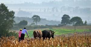 SA's black farming community needs sustainable agribusiness support says AFGRI