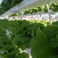 AAVF creates platform for vertical farming network