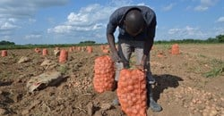 What young Zambians have to say about making farming more attractive