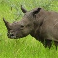 Call for nominations: African rhino conservation leaders