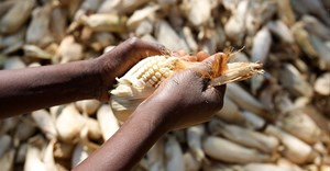Africa Food Security 11 via