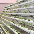 Why rooftop farms may be the next big thing