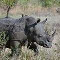 Vodacom, Celcom join fight against rhino poaching, arming rangers with tech
