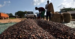 Chocolate puts Ivory Coast on top in Africa's agriculture trade