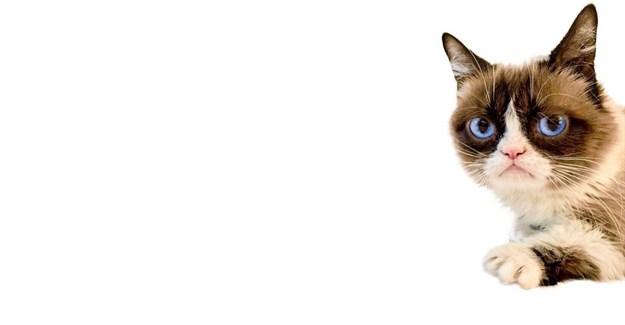 Grumpy Cat dies at age 7