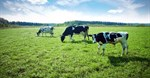 Turning methane into carbon dioxide could help us fight climate change
