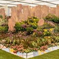 Kirstenbosch wins another gold medal at the Chelsea Flower Show