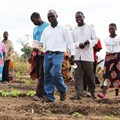 How design thinking united Malawian researchers and farmers