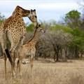 Explore Mpumalanga with us | ZAR4,200 pp
